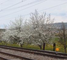 am Bahnübergang in Hendschiken