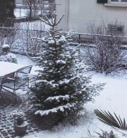 ehemals ein Weihnachtsbaum, jetzt Futterständer für die Singvögel
