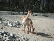 Jungtiere im Zoo