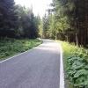 durch viel Wald unterwegs zum Passo Manghen