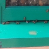 Bienenhäuschen