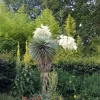 Detail aus der Gartenausstellung