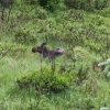Wildtiere im Nationalpark