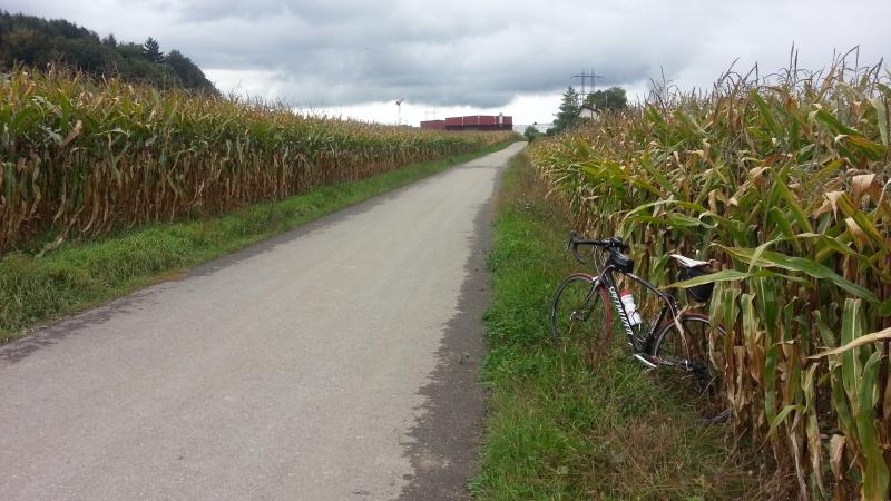 Herbstliche Maisfelder