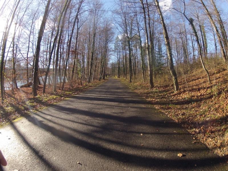 Morgenstimmung im Novemberwald