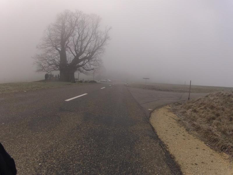 Linner Linde im Nebel