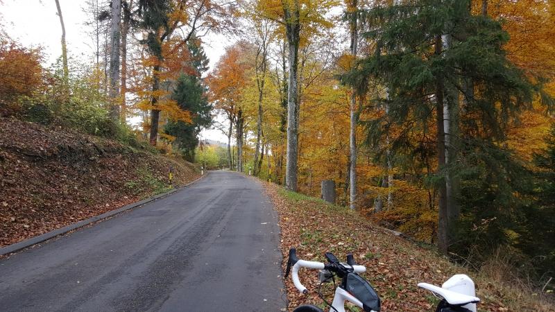Herbstfarben an der Schafmatt