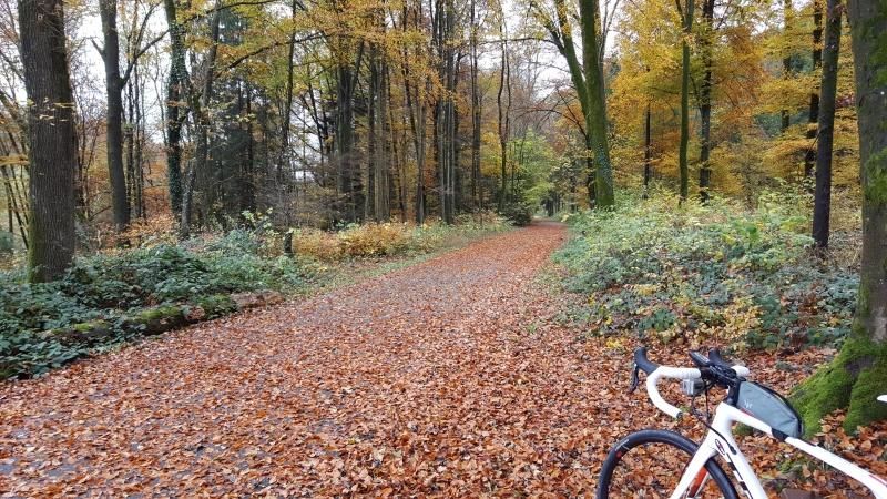 Herbst auf dem Radweg