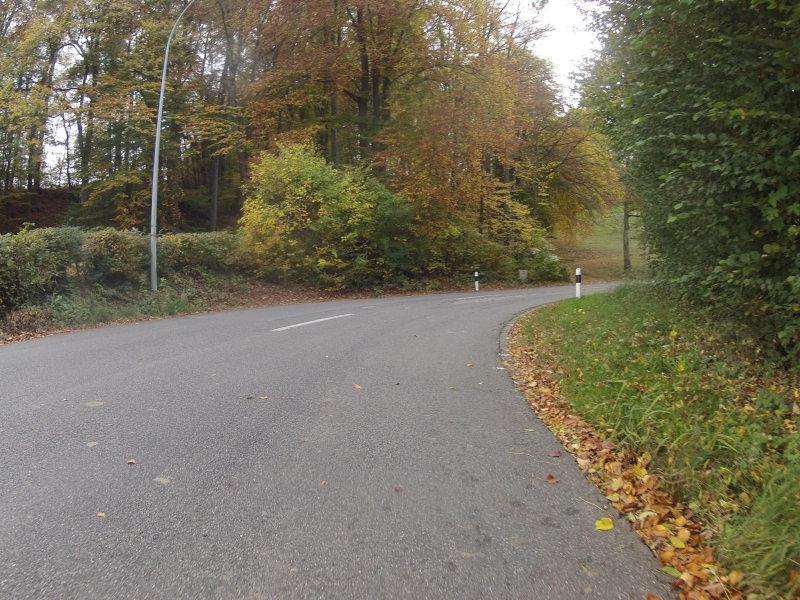 Herbstlicher Wald zwischen Boniswil und Leutwil