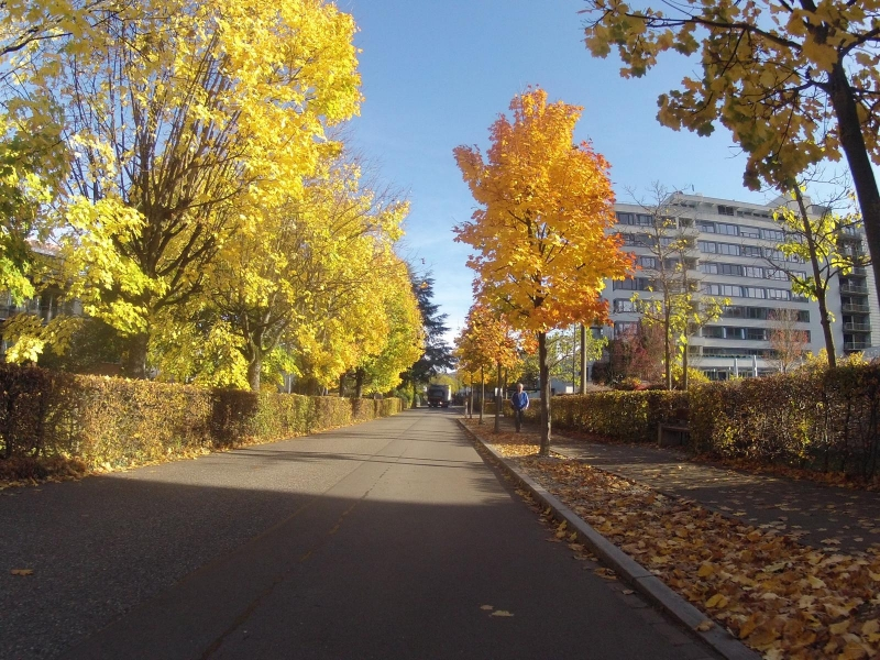 herbstliche Quartierstrasse in Bad Zurzach