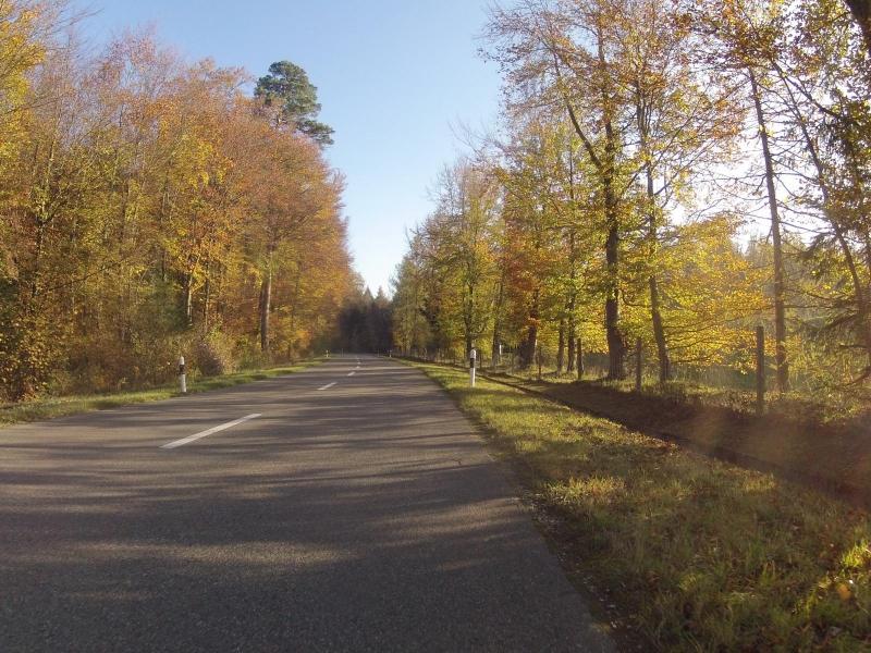 Herbstlicher Wald bei Mülligen