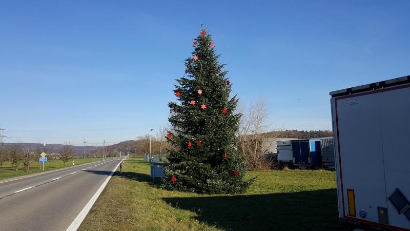 Weihnachtsbaum im Rheintal bei Leibstadt