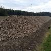 Ein Berg von Zuckerrüben