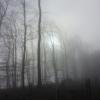 Nebel am Bruggerberg