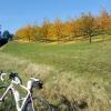 Kirschbäume im Herbst