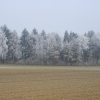 Frost aus dem Nebel