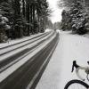 Winterlicher Wald zwischen Bremgarten und Bünzen