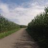 fast wie im Maislabyrinth