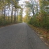 Herbstwald, Auenwald in der Nähe von Villnachern