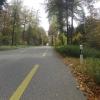 Herbstlicher Wald zwischen Brunegg und Othmarsingen
