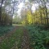 Herbstlicher Wald bei Rupperswil