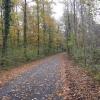 Herbstlicher Auenwald im Aaretal