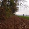 Waldweg zum Rüsler