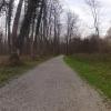 Auenwald entlang der Aare bei Brugg