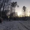 Abstecher in den Wald