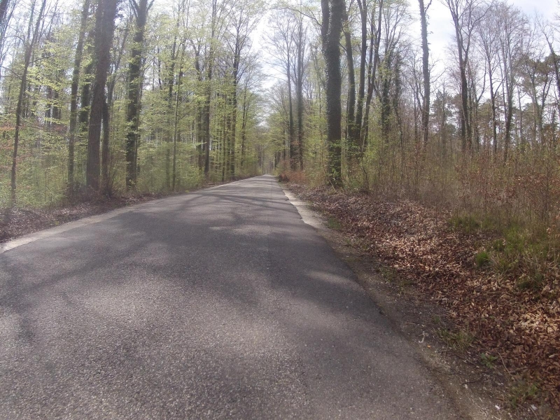 Frühlingsgrüne im Auenwald