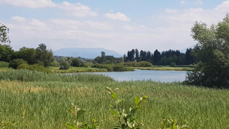 Naturschutzzone an der Reuss