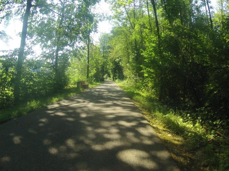 Auenwald entlang des Klingnauer Stausees