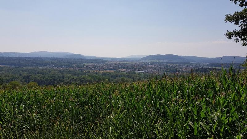 Oberhalb Auenstein in Richtung Seetal