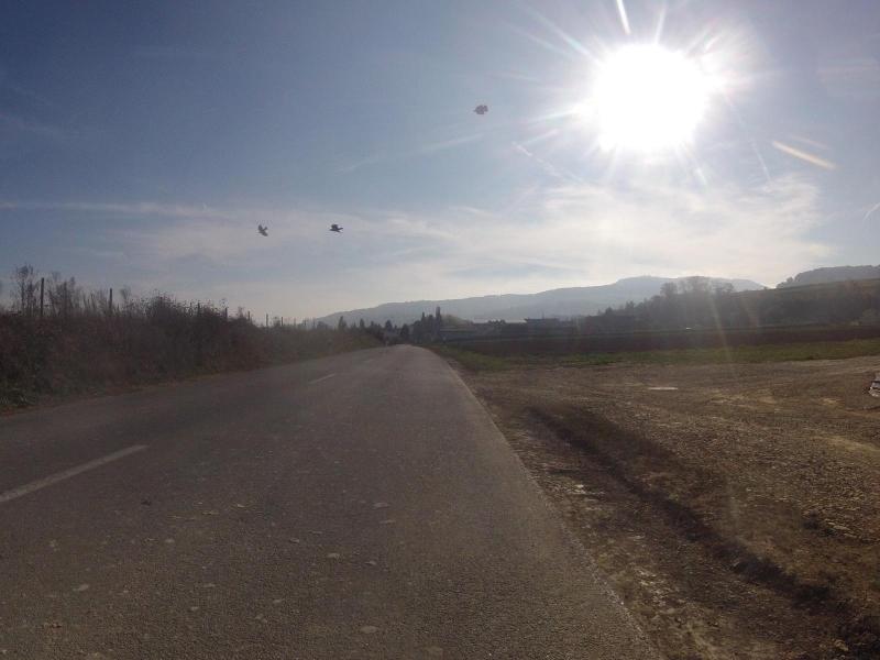 Krähen über dem Schinznacherfeld