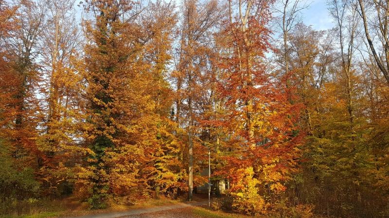Herbstlicher Wald an der Aare