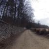 Dem Waldrand entlang