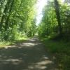 Auenwald entlang der Aare