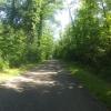 Auenwald im Aaretal