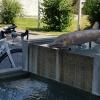 Brunnen auf dem Schulhausplatz
