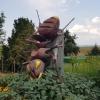 Ameise bei Wallenschwil