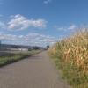 Im Rheintal unterwegs