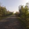 Radweg auf dem Damm entlang der Aare