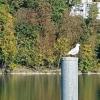 am Rhein bei Full