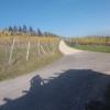 Rebberg oberhalb Auenstein