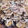 Vor allem Pilze