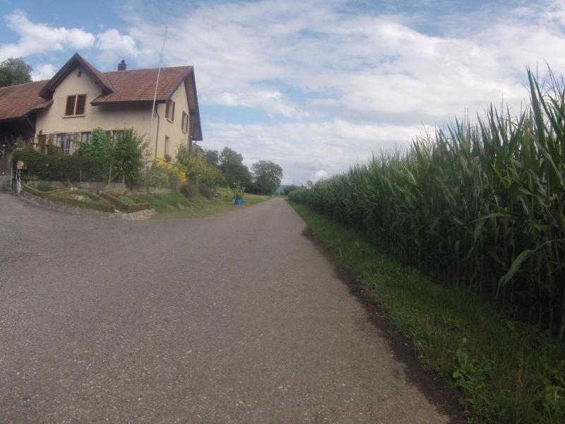 Radweg ins Birrfeld