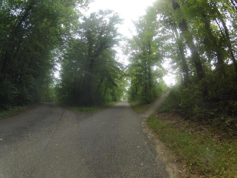 Auenwald an der Aare