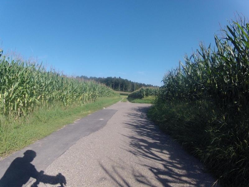 Wie im Maislabyrinth