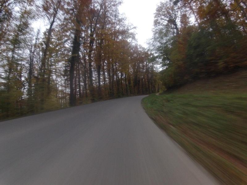 farbiger Wald bei Müslen