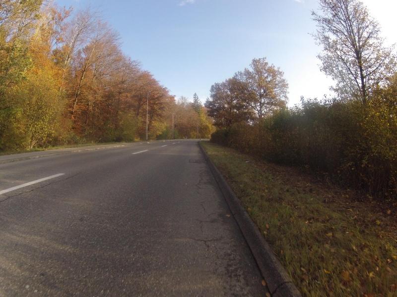 Herbstlicher Waldrand bei Rohr